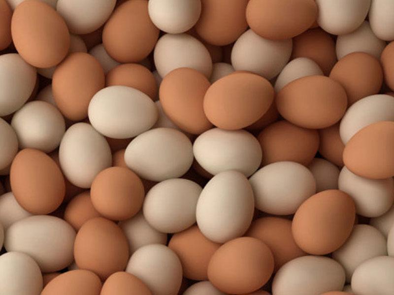 trứng có vỏ